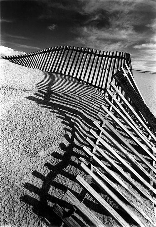 old-fences-dune