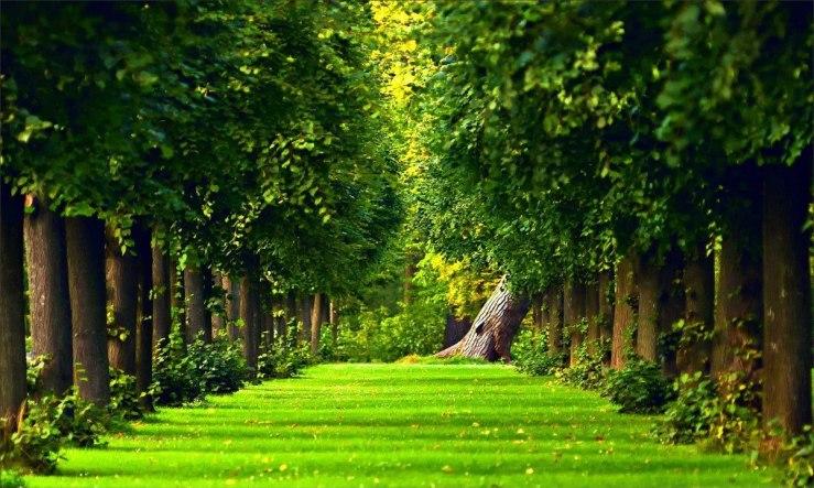 painel-paisagem-verde